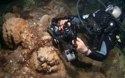 PADI Digital Underwater Videography Specialty Course